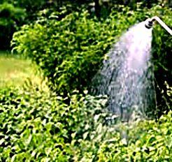поливать