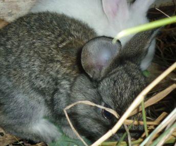 корма для кроликов