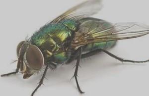 мухи на даче