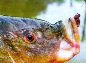 приманки для рыбной ловли (2)