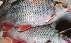 посол рыбы в дом условиях
