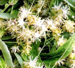 сбор и сушка трав (2)