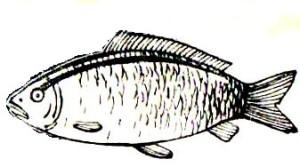 как разделать  рыбу  в дом усл  (6)