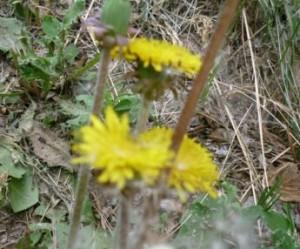 собрать лекарств растения (1)