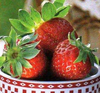 Выращивание клубники: сорт клубники – все сорта клубники