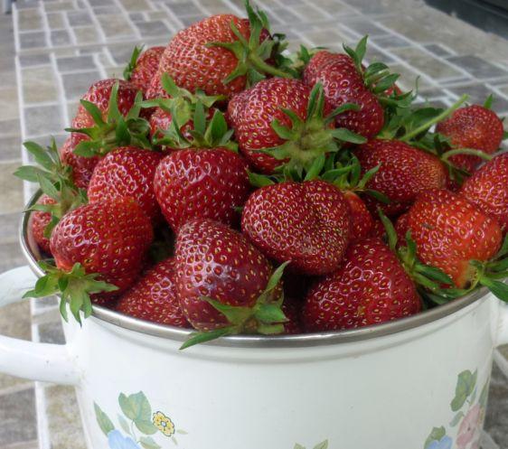 1клубника ягоды (3)