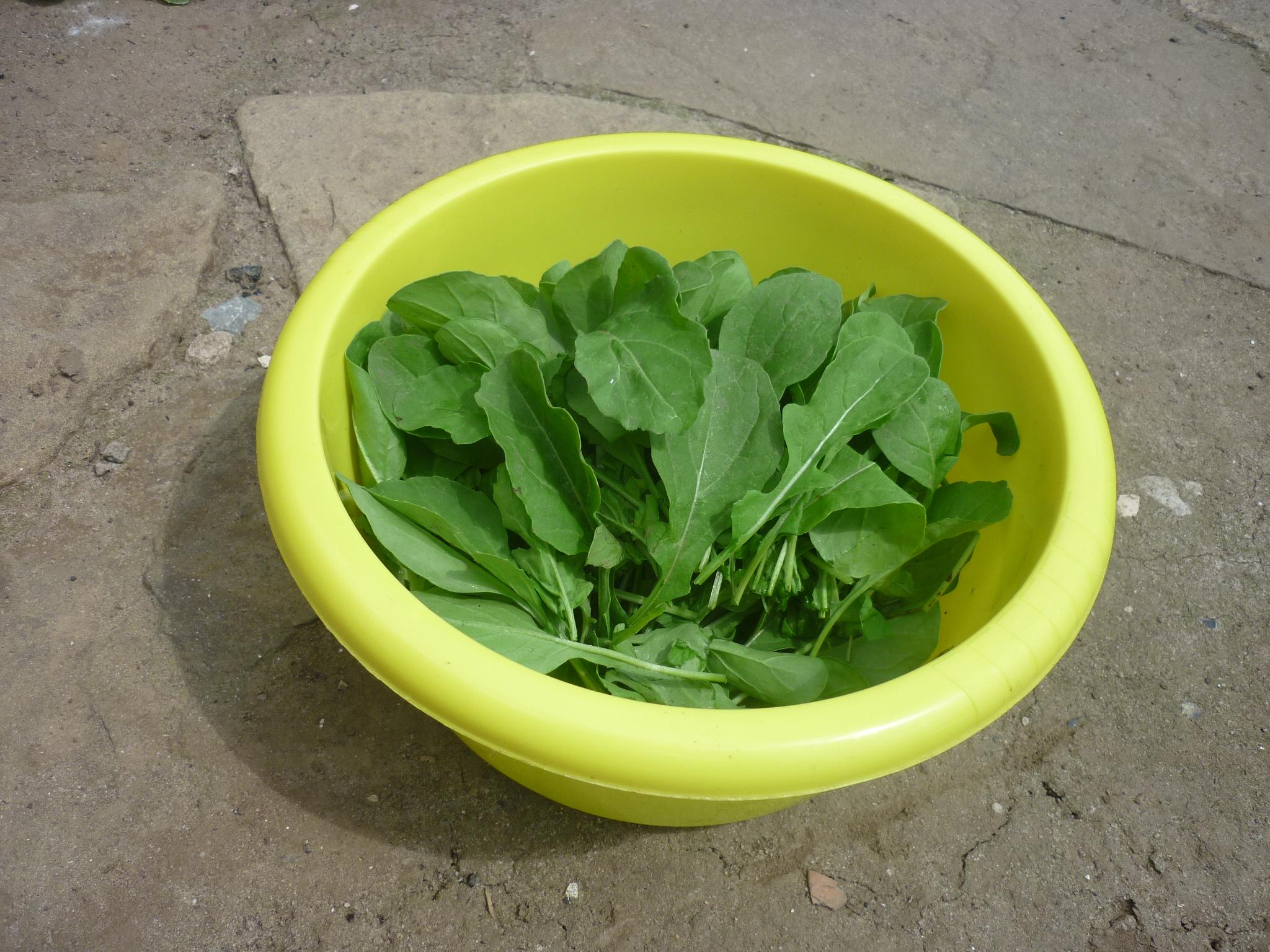 руккола и салат (3)