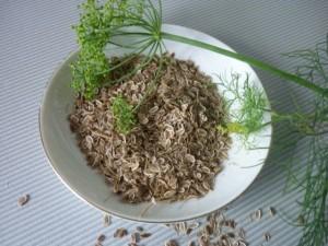 укроп семена (2)