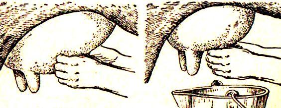 доение заключит массаж