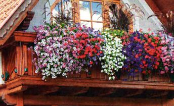 озеленение балконов (4)