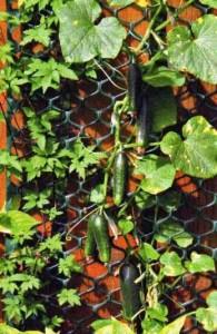 вертикальное озеленение1