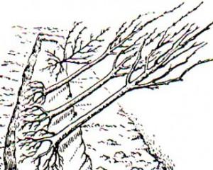 как сажать деревья сохранить саженцы до весны