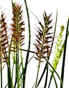 декоративные растения первая