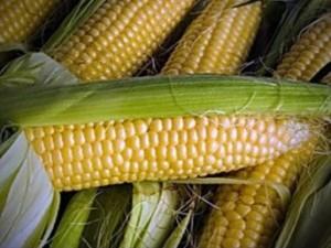 полезные св кукуруз