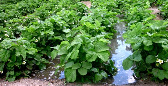жидкие органич удобрения (3)