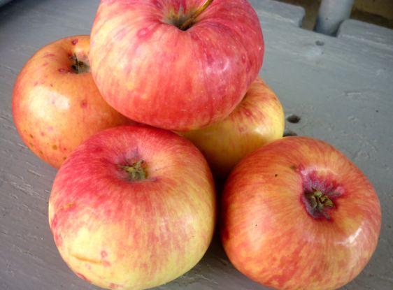 яблоки заготовки рецепты яблоки в банках