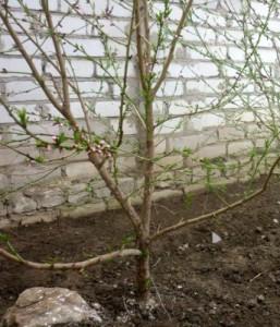 чем удобрять плод дер весн осен