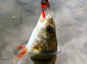 удачная рыбалка1