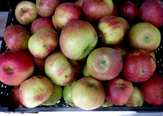 яблоки портятся при хранении