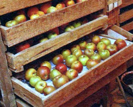 ябл-в-ящ