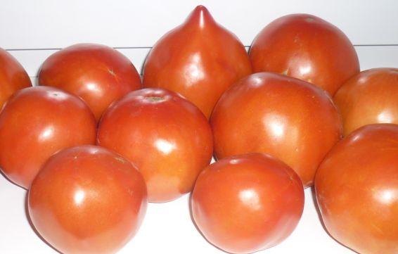 как хранить помидоры3