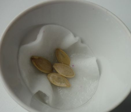 пров семян на всхожесть