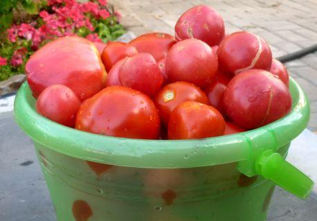 выбираем сорта томат (3)