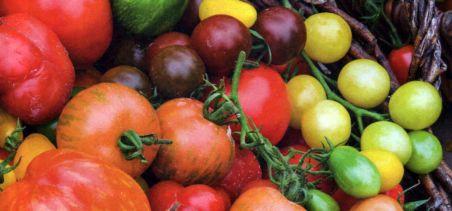 выбираем сорта томат (4)