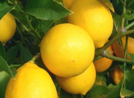 лимон мейер4