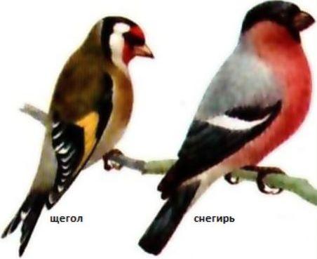как сод и кормить птиц (1)