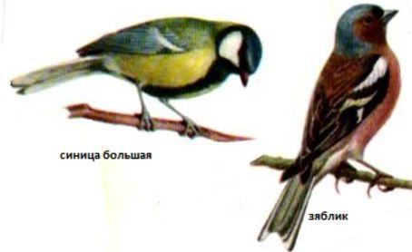 как сод и кормить птиц (2)