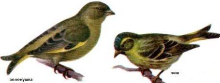 как сод и кормить птиц (3)