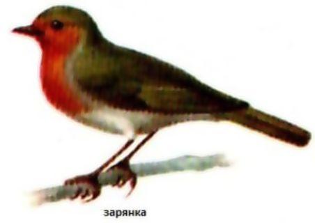 как сод и кормить птиц (4)
