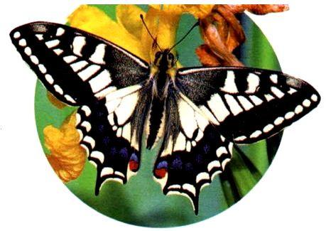 насекомые перв