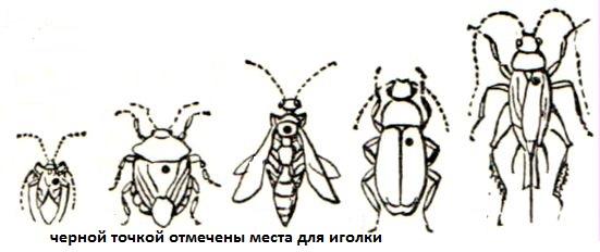 насекомые3