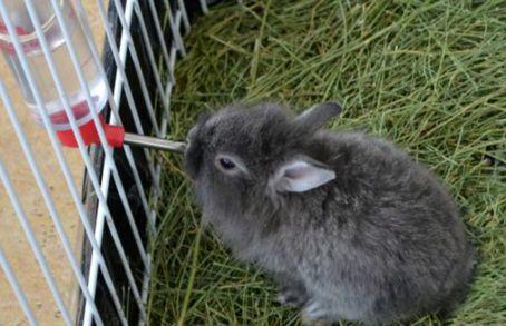 декорат крол