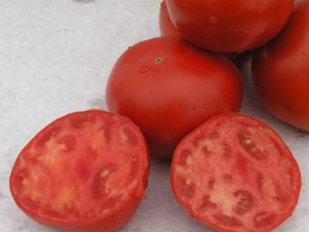 томат скиф2