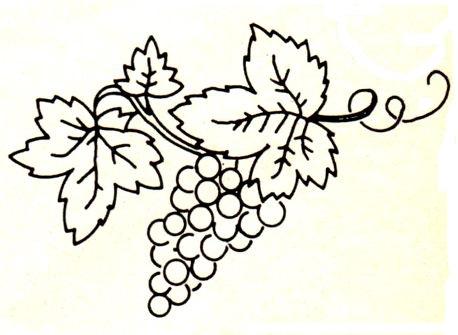 виноград 3