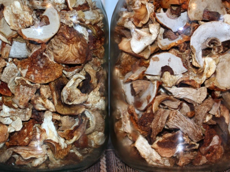 сушить грибы1