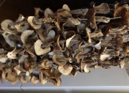 сушить гриб