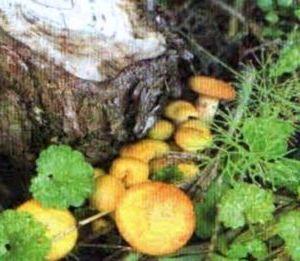 что такое грибы 2