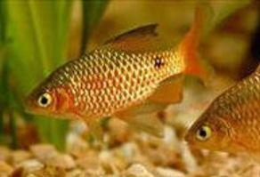 4 рыбки