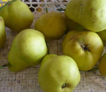 груши и сушить (1)